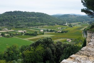View along the sea of vines seen from la Maison du Vin et des Truffes in Ménerbes